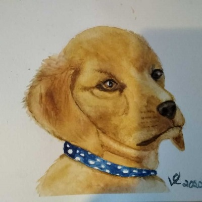 Blue-Collar-dog